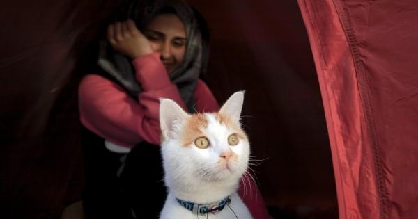 Είναι ο Ταμπούς, ο χαριτωμένος γάτος – πρόσφυγας που ήρθε από τη Συρία (Εικόνες)