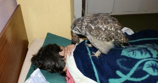 Τι έγινε όταν η κουκουβάγια αποφάσισε να ευχαριστήσει τον άνθρωπο που την βοήθησε (Εικόνες)
