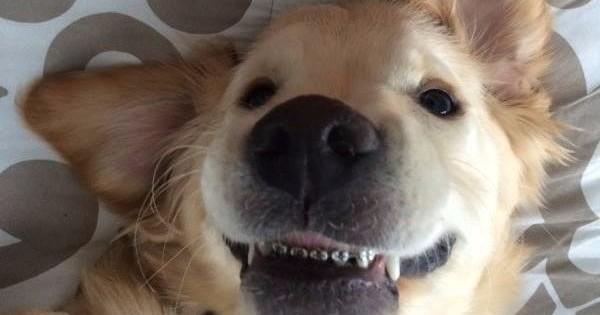 Ραγίζει καρδιές ο πρώτος σκύλος με σιδεράκια στο κόσμο! (Εικόνες)