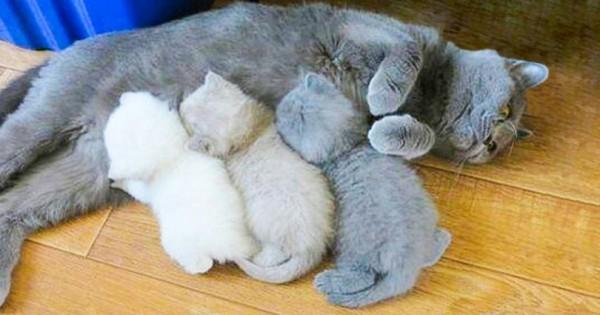 20 Γάτες που Ξέρουν τα Πάντα για την Φροντίδα των Μικρών τους (Εικόνες)