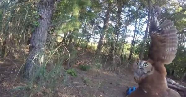 Άκουσε μια κραυγή στο δάσος. Όταν πλησίασε είδε ότι ήταν ένα πλάσμα που είχε απελπισμένα ανάγκη για βοήθεια.. (Βίντεο)