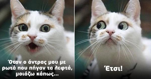 15 ξεκαρδιστικές γάτες με ανθρώπινες εκφράσεις προσώπου (Eικόνες)