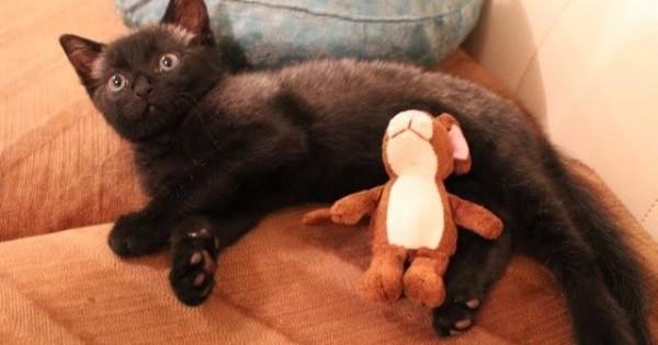Στην αρχή νόμιζε ότι ήταν αρουραίος. Όταν πλησίασε όμως κατάλαβε ότι ήταν ένα γατάκι που ήθελε βοήθεια.. (Βίντεο)