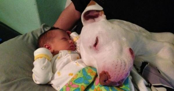 Αυτοί οι Γονείς Άφησαν το Μωρό τους Μόνο του με το Σκύλο. Όταν Επέστρεψαν, Βρήκαν ΑΥΤΟ. (Εικόνες)