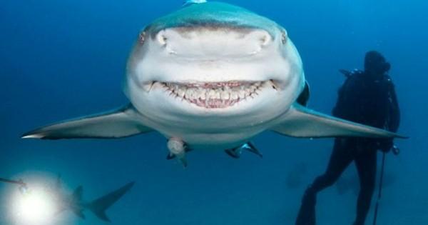 Ο καρχαρίας με το… πλατύ χαμόγελο (Εικόνες)