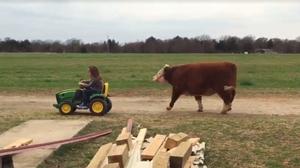 girl leading her cow around: https://www.facebook.com/wilma.willis.5/videos/1045006028906270/