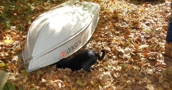 Κανείς δε φανταζόταν τι κρυβόταν κάτω από μια βάρκα μέχρι που ο σκύλος ξεκίνησε να γαβγίζει και να τρέχει γύρω από αυτήν. (Εικόνες)