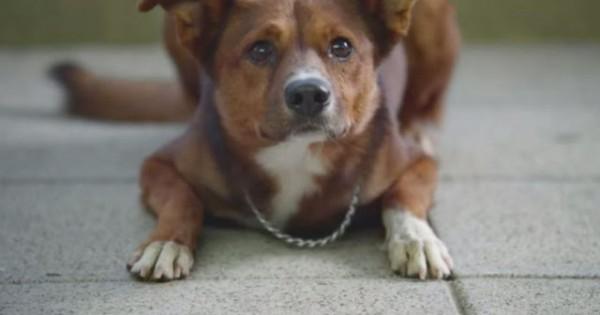 Ο σκύλος μύρισε την καρδιά του αφεντικού του σε ξένο σώμα! – Θα χρειαστείς χαρτομάντιλα αφού το δεις! (Bίντεο)