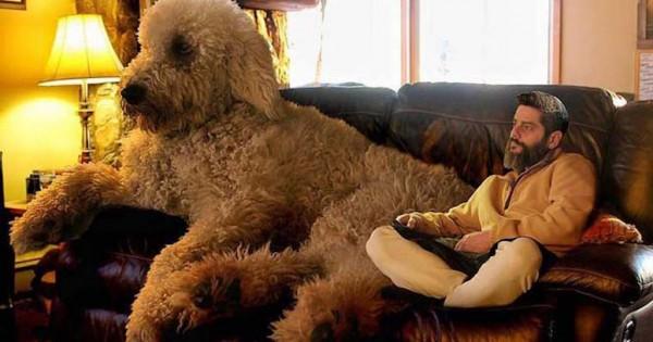 """Αυτός ο φωτογράφος ξετρελαίνει το Instagram με τον """"γιγάντιο"""" σκύλο του"""