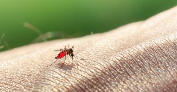Αυτός είναι ο λόγος που τα κουνούπια προτιμούν να τσιμπούν συγκεκριμένους ανθρώπους και όχι όλους. (Βίντεο)