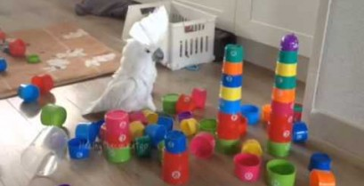 Εκνευρισμένος παπαγάλος (Βίντεο)