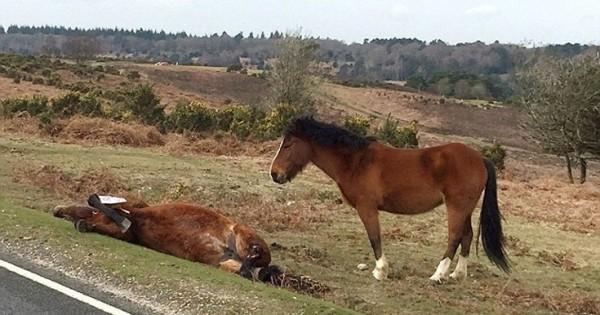 Άλογο πενθεί δίπλα στη νεκρή μητέρα του (Εικόνες)