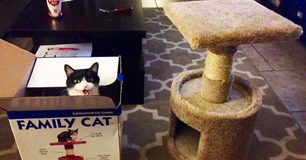 22 γάτες που αντέδρασαν με ξεκαρδιστικό τρόπο στο δώρο που πήραν (Εικόνες)