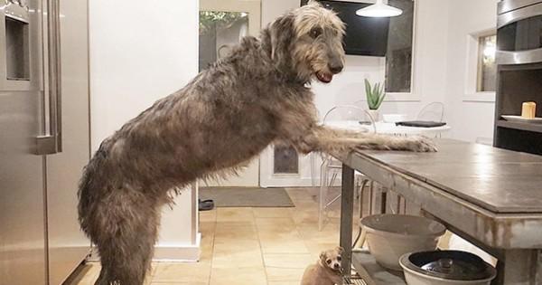Πολλά μπράβο: Αυτός ο άνδρας υιοθετεί γέρικα σκυλιά που δε βρίσκουν σπίτι! (Εικόνες)