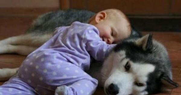 Σκύλος ειδοποίησε τους γονείς για την κακοποίηση του μωρού τους από την μπέιμπι σίτερ!