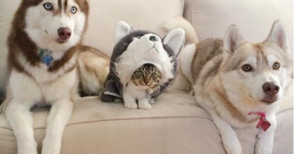 10 πανέμορφοι σκύλοι που που θα σας φτιάξουν την ημέρα! (Εικόνες)