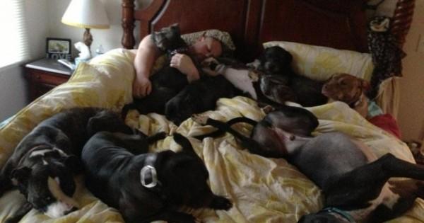 Ένα ζευγάρι έφτιαξε ένα τεράστιο κρεβάτι για να κοιμάται μαζί με τα 7 σκυλιά του! (Εικόνες)