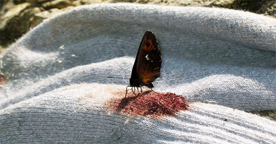 Αυτό το μυστικό για τις πεταλούδες θα σας κάνει να τις δείτε με άλλο μάτι! (Εικόνες)