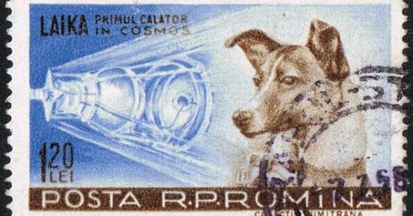 Η αλήθεια για το σκυλί – αστροναύτης: Πώς έγινε πείραμα από τους Ρώσους (Βίντεο)