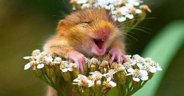 Χαμόγελο! Όταν τα ζώα μας δίνουν μαθήματα αισιοδοξίας! [photo]