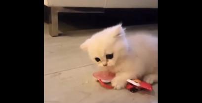 Το γατάκι και η πιπίλα (Βίντεο)