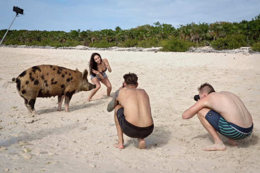 Γουρούνια