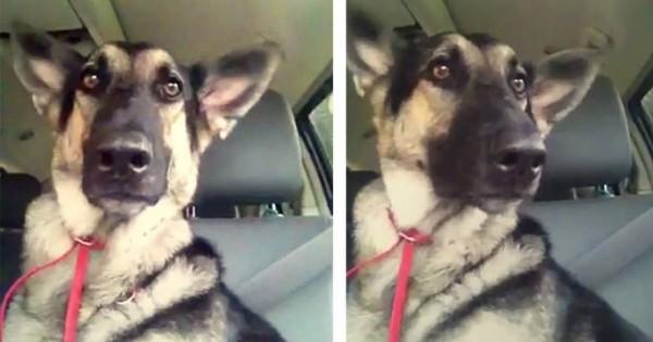 Η αντίδραση αυτού του σκύλου όταν ακούει το αγαπημένο του τραγούδι είναι αξιολάτρευτη! (βίντεο)
