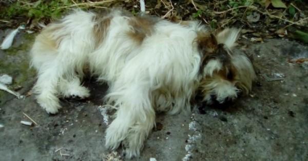 Καταδικάστηκε ερήμην η 46χρονη που πέταξε από τον 4ο όροφο το σκυλί της συγκατοίκου της