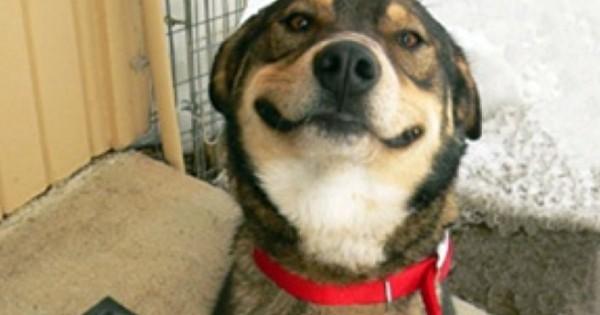 Πρόστιμα σε ιδιοκτήτες σκύλων για παράλειψη εμβολιασμού