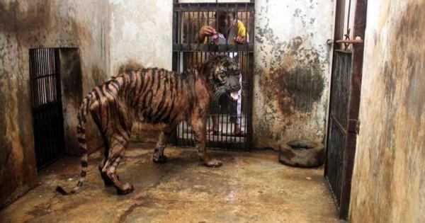 """Εικόνες Ντροπής: """"Ο Ζωολογικός Κήπος του Θανάτου"""". Τους Πετάνε ένα Κομμάτι Κρέας και…"""