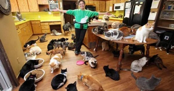 ΗΠΑ: Γυναίκα ζει με 1.000 γάτες και … χαρίζει το σπίτι της σε αυτές [βίντεο]