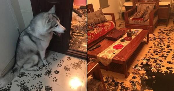 Μια Οικογένεια άφησε το Σκύλο μόνο στο Σπίτι. Όταν Αντίκρισαν ΤΙ είχε συμβεί, Πάγωσαν!