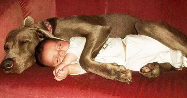 23 φωτογραφίες που τονίζουν την ξεχωριστή σχέση μεταξύ παιδιών και σκύλων.