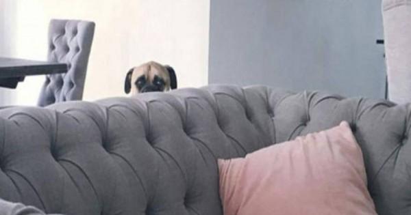 Ο σκύλος που παρακολουθεί τη γυναίκα του αφεντικού του και έγινε viral (φωτό)