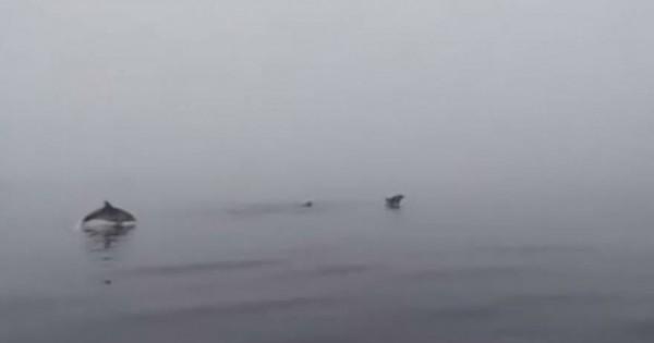 Απίθανα παιχνίδια δελφινιών στην Εύβοια (vid)