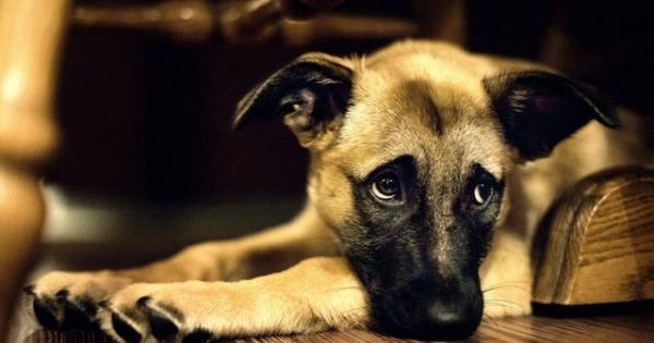 Μήπως ο σκύλος σου έχει Άνοια; Online τεστ αξιολόγησης