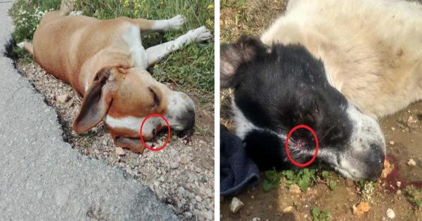 Άλλα 2 σκυλιά νεκρά πυροβολημένα στο κεφάλι έξω από το Δημοτικό Κυνοκομείο Ραφήνας – Πικερμίου (Εικόνες)
