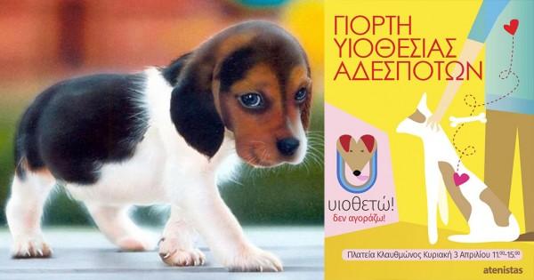 Γιορτή υιοθεσίας αδέσποτων ζώων στην Πλατεία Κλαυθμώνος.