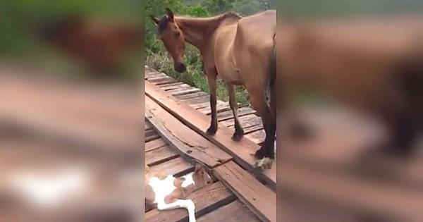 Ένας άνδρας έσωσε το αβοήθητο αλογάκι που παγιδεύτηκε σε μια γέφυρα (Βίντεο)