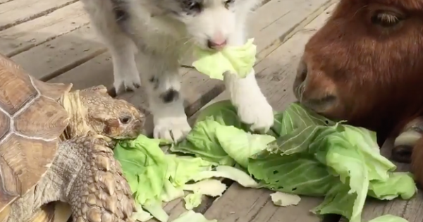 Τι μπορούν να κάνουν μαζί ένα μικρό πόνυ, μια χελώνα και ένα κουταβάκι; Δε θα το πιστέψετε… (Βίντεο)