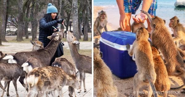 10 υπέροχα μέρη όπου οι άνθρωποι ζουν αρμονικά μαζί με εξωτικά ζώα (Εικόνες)