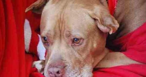 Συγκίνησε όλο το διαδίκτυο η φωτογραφία που ανέβασαν για την υιοθεσία ενός σκύλου!