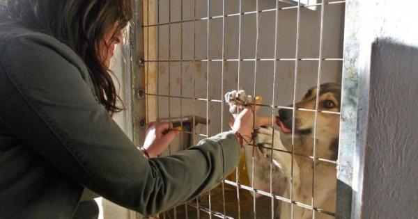 Η Ναταλία Γερμανού επισκέφθηκε το Καταφύγιο Αδέσποτων Ζώων στο Μαρκόπουλο Αττικής