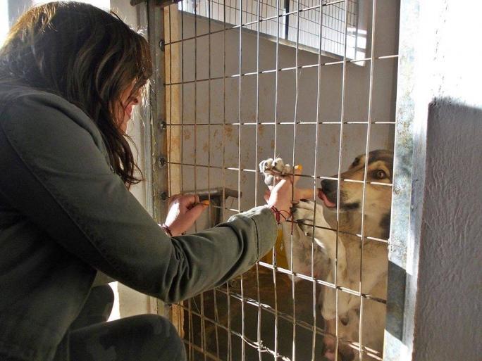 Ναταλία Γερμανού Καταφύγιο Αδέσποτων Ζώων