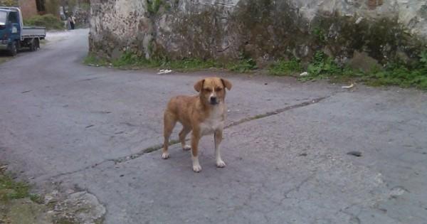 Ένα αδέσποτο σκυλί νεκρό από φόλα στο Σκουτάρο Λέσβου