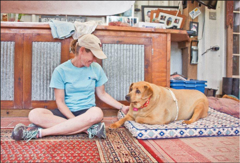 υπέρβαρος σκύλος Σκύλος βάρος