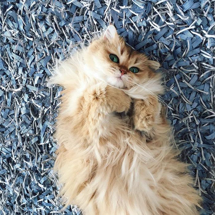 Γάτα Instagram