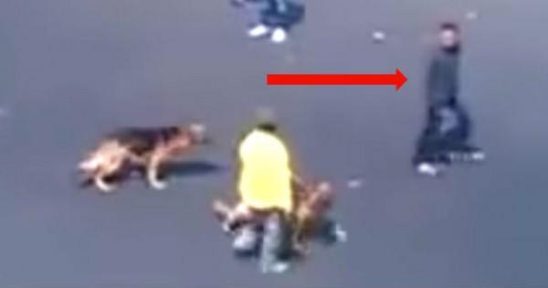 Ένας αλήτης νόμιζε πως ήταν αστείο να πετάξει τούβλα σε 2 σκυλιά. Η κατάληξή του θα σας σοκάρει!