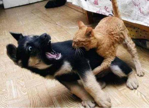 Σκύλος Γάτα VS Σκύλος Γάτα