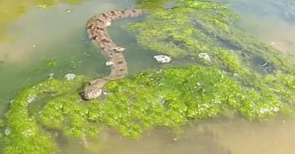 Είδε ένα φίδι στο νερό και άρχισε να το βιντεοσκοπεί. Μόλις δείτε ΑΥΤΟ που κατέγραψε, θα μείνετε άφωνοι!